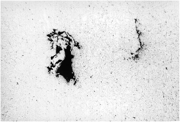 Bild 1: Oxidhauteinschlüsse im Bruchgefüge Gussteiles aus der Legierung AlSi12, ungeätzt, 60:1