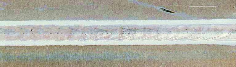 Bild 3: Plasma-MIG-Schweißnaht