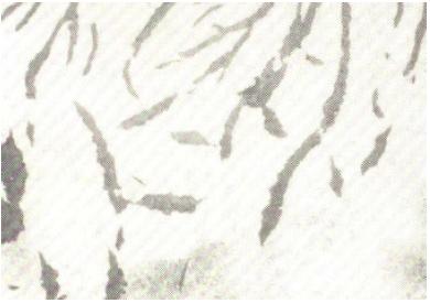 Bild 2: Grafitlamellen mit angelagertem Segregatgrafit, 100:1, geätz