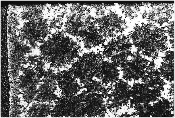 Bild 2: Eutektische Körner im Gusseisengefüge, 15:1, geätzt