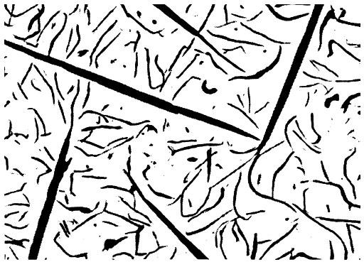 Bild 1: Garschaumgrafit in übereutektischem Gusseisen mit Lamellengrafit, Vergrößerung 100:1 (Quelle: S. Hasse, Hersg. Gießerei-Lexikon, Fachverlag Schiele und Schön, Berlin)