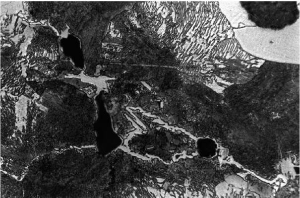 Bild 7: Gefüge eines grau erstarrten Gusseisens mit Korngrenzenkarbiden, 100:1, geätzt