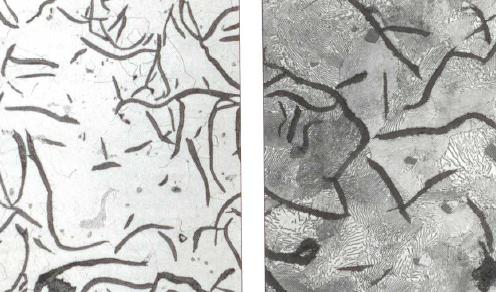 Bild 1: Mikrogefüge von GJL, links ferritisch, rechts perlitisch, eingelagert Grafitlamellen, 200:1