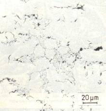 Bild 1b: Unterkühlungs-D-Grafit, ungeätzt, 500:1
