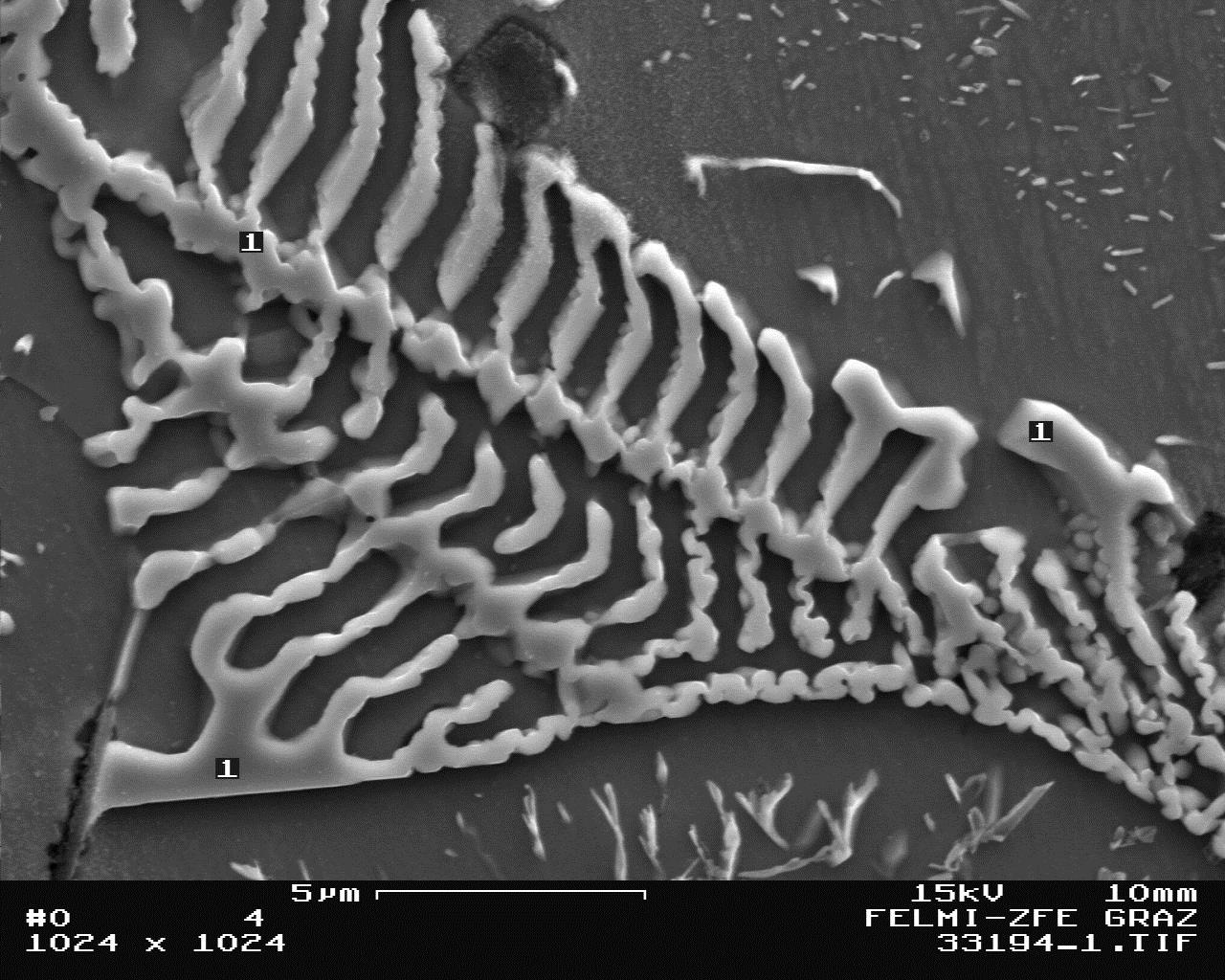 Fig. 2. SEM- micrograph of molybdenum carbides, 5000:1