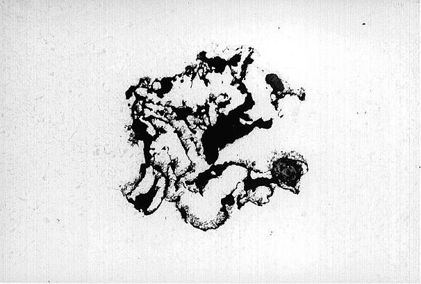 Bild 2: Schliff durch den Bereich 1 aus Bild 1, Vergrößerung 64:1, ungeätzt