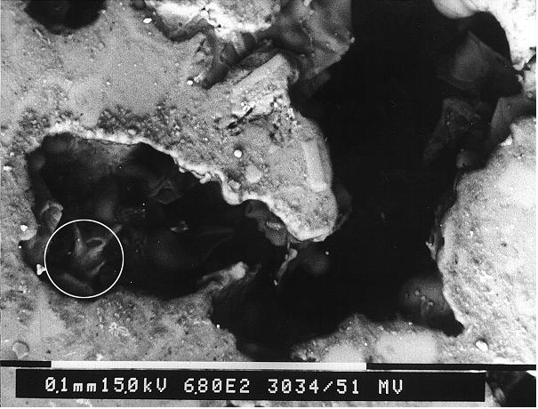 Bild 3: REM-Aufnahme aus dem Bereich 1 in Bild 1 (Übersicht)