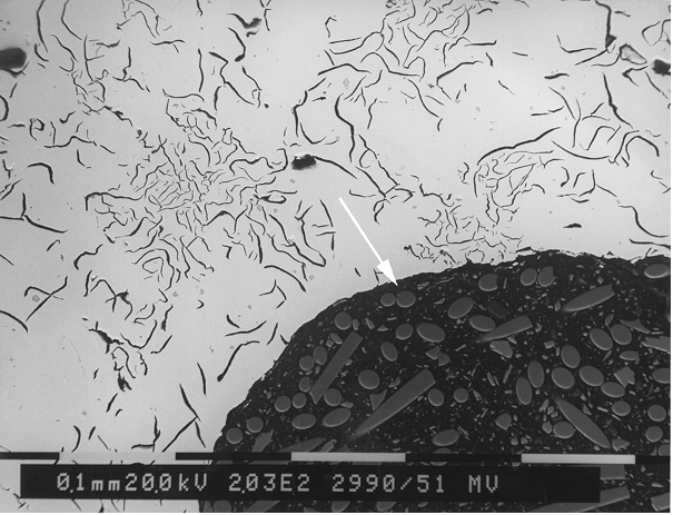 Bild 4: REM-Aufnahme der Pinholeoberfläche mit gekennzeichneter EDX-Meßstelle