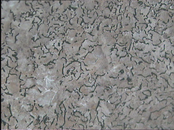 Fig. 2: Predominantly pearlitic matrix of vermicular graphite cast iron (GJV 500), 100:1, etched
