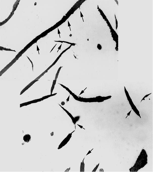 Fig. 3: Widmannstätten graphite