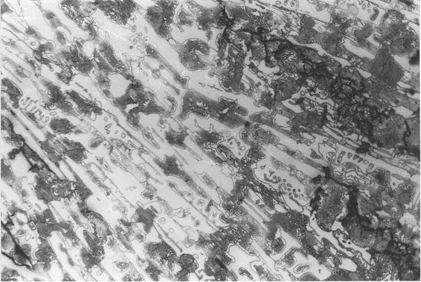 Bild 4: Grundgefüge der in Bild 3, rechts markierten Randzone, Vergrößerung 100:1