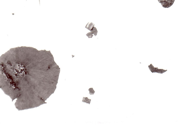 Fig. 2:  Titanium carbide in ferritic GJS, 500:1 (source: FT&E)