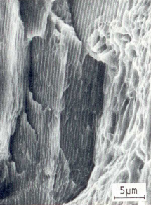 Bild 4: Ausschnitt aus der Dauerbruchfläche vom Stahl  C 75N, Zugschwellbeanspruchung, 3000:1