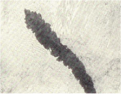 Fig. 1: Graphite flake with accumulations of segregated graphite, 500:1, etched