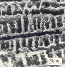 Bild 2: D-Grafit tiefgeätzt, Dendritenpakete vollständig herausgelöst, 650:1