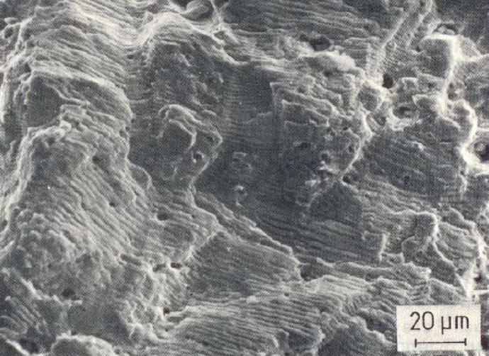 Bild 2: Schwingungsbruchfläche eines CrNi-Stahles, Bruchbahnen und nichtmetallische Einschlüsse bzw. Löcher, 500