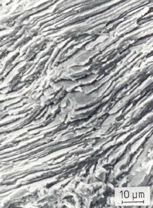 Bild 5: Dauerbruchfläche bei GJL 200, schräg liegender Perlitbereich, 1000:1
