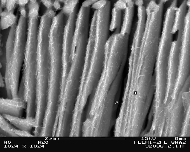 Bild 5: Detail aus Bild 3 mit EDX-Messpunkten, 20000:1