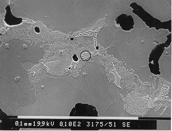 Bild 2: REM-Aufnahme eines der Seigerungscarbide aus Bild 1