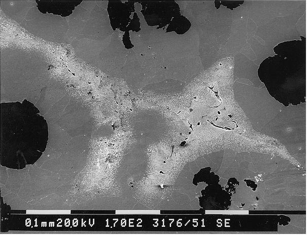 Bild 7: Seigerungsbereiche bei dickwandigen Gusseisen mit Kugelgraphit, deutlich ist eine Carbidbildung in den zuletzt erstarrten Bereichen sichtbar.