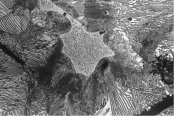 Bild 1: Übliche Ausbildung des Phosphideutektikums bei langsamer Erstarrung, hier im perlitischem Grundgefüge, Vergrößerung 500:1, geätzt mit HNO3.