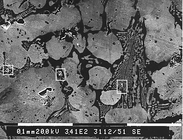 Bild 3: REM-Aufnahmen aus Bereichen des Phosphidnetzwerkesaus Bild 2 mit gekennzeichneten Bereichen für EDX-Flächenanalysen