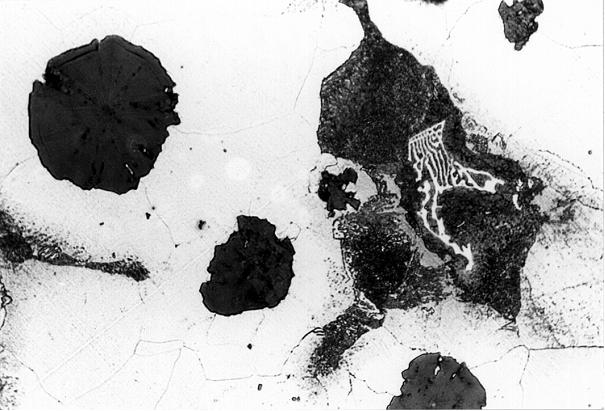 """Bild 4: """"Chinesenschrift""""; Bezeichnung für molybdänreiche eutektische Mischkarbide, Wanddicke 75 mm, Vergrößerung 300:1, geätzt mit HNO3"""