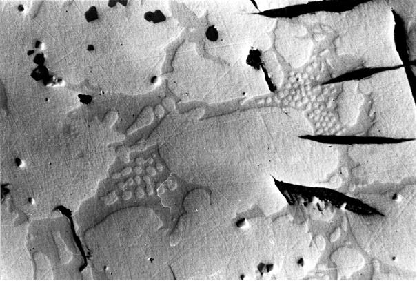 Bild 1: Titan-Vanadium-Carbonitride, welche grau und erhaben erscheinen, 300:1, geätzt mit HNO3, Interferenzkontrast, Schräglicht, die kleinen schwarzen Einschlüsse sind Sulfide