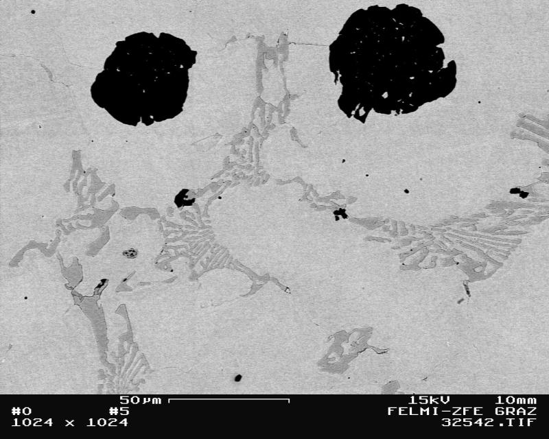 Bild 1: Austenitisches Gusseisen mit Kugelgraphit, das Gefüge besteht ausschließlich aus der austenitischen Grundmasse und groben nadelförmigen Eisenchromcarbiden vom Typ (FeCr)3C, 500:1, geätzt