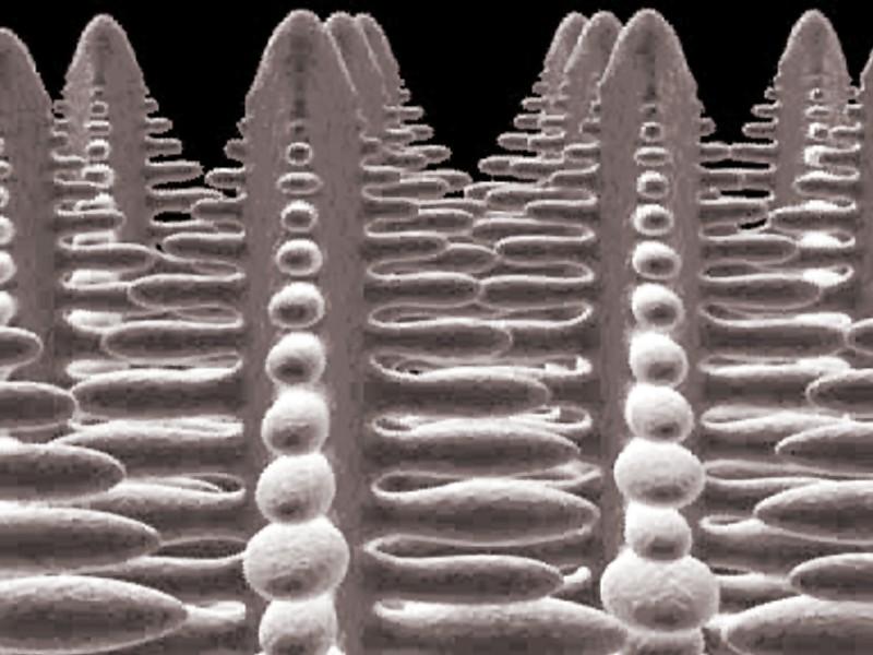 Bild 1: Dendriten mit sekundären Dendritenarmen