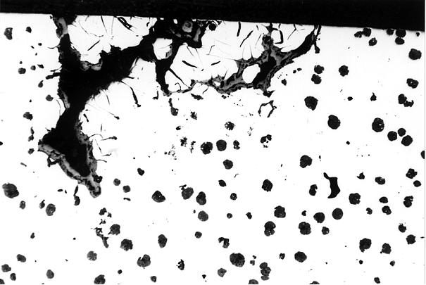 Bild 1: Typische Drosseinschlüsse bei Gusseisen mit Kugelgrafit, Vergrößerung 50:1, ungeätzt